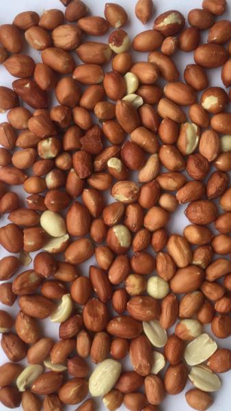 Erdnusskerne mit Haut • Wildfutter • 25kg